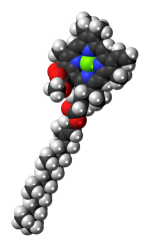 Space-filling model of the chlorophyll a molec...