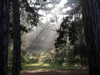 Wimbledon Common autumn mist