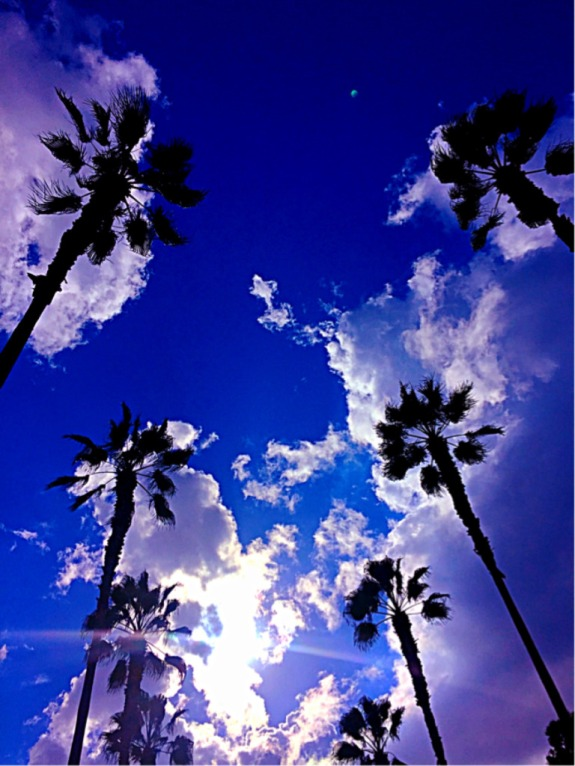 """Palms in the Clouds"" (Orange County, CA)"