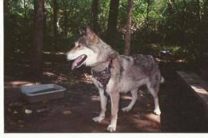 wolf-002