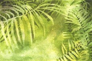 Image result for fern images